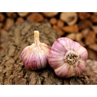 Allium sativum ´Havran´ / Kuchynský cesnak na výsadbu, bal. 3 hlavičiek, 125 g
