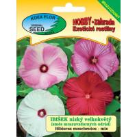 Hibiscus moscheutos / Ibištek bahenný zmes,nízky, veľkokvetý,  bal. 5 s