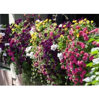 Kolekcia 24 rastlín do hrantov, bal. 24x K7