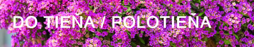 Balkónové kvety vhodné do tieňa a polotieňa