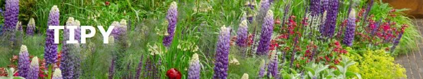 Tipy na rastlinky