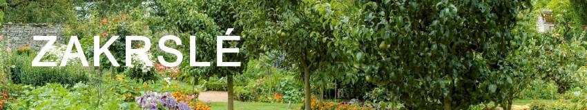 Zakrslé ovocné stromy