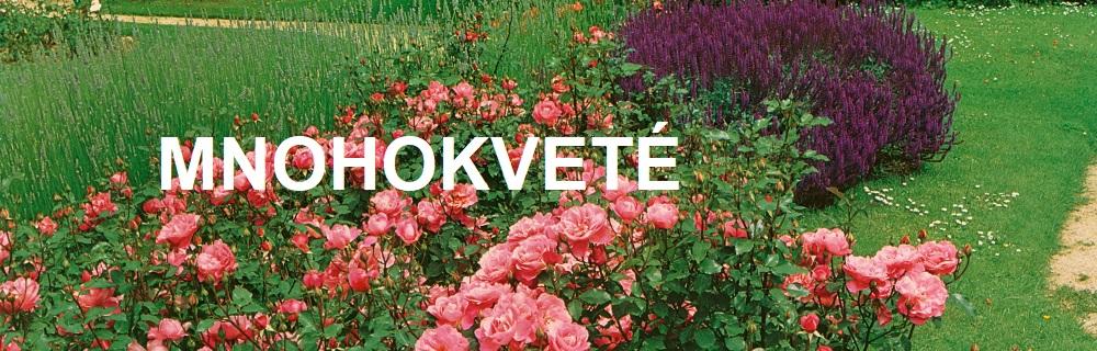 Mnohokveté ruže