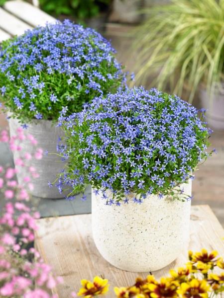 Hnojenie a starostlivosť o rastliny v nádobách