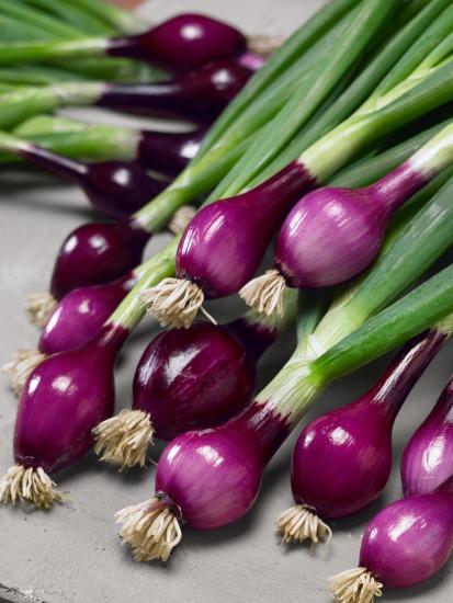 Semená zeleniny a predpestovanie (Allium cepa)