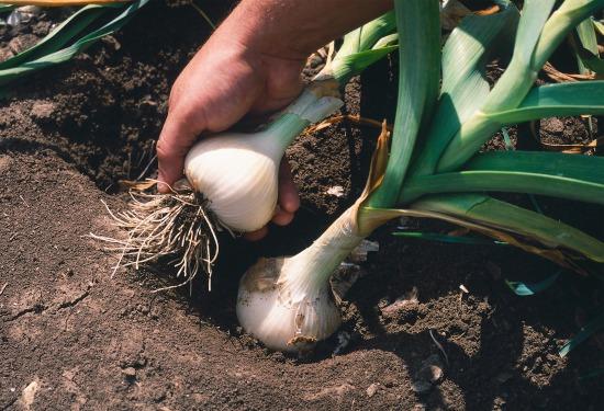 Starostlivosť o úžitkovú záhradu