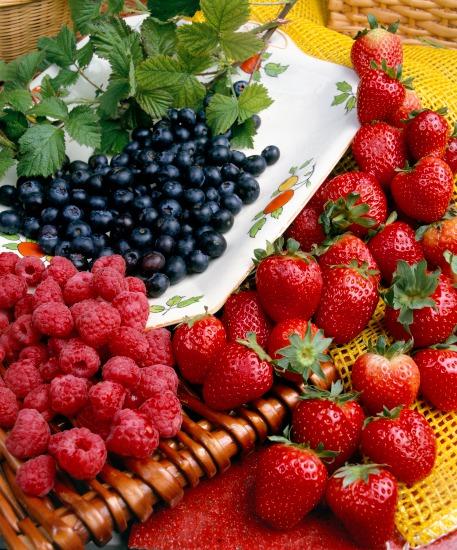 Výsadba a výber kultivarov