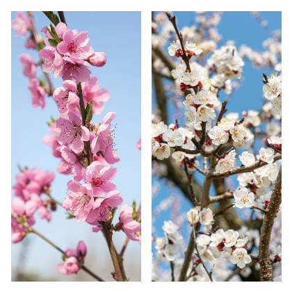 Ako sa starať o ovocné stromy