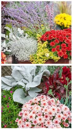 Balkónové kvety na jeseň