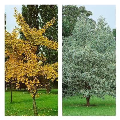 Dominanta záhrady -strom