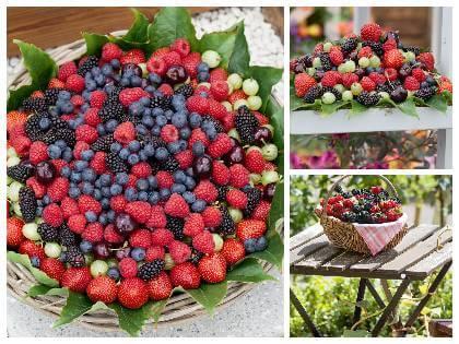Drobné ovocie na balkóne