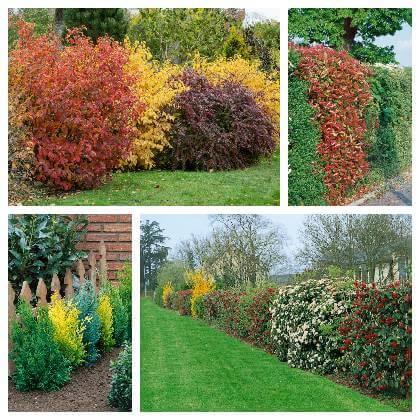 Farebný živý plot
