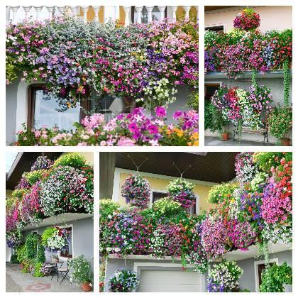 Kombinácie balkónových kvetov