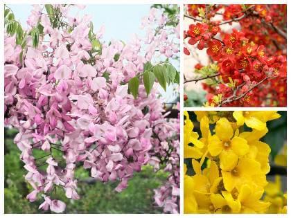 Kríky kvitnúce na jar