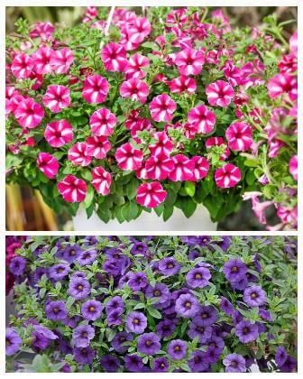Kvety do samozavlažovacích kvetináčov