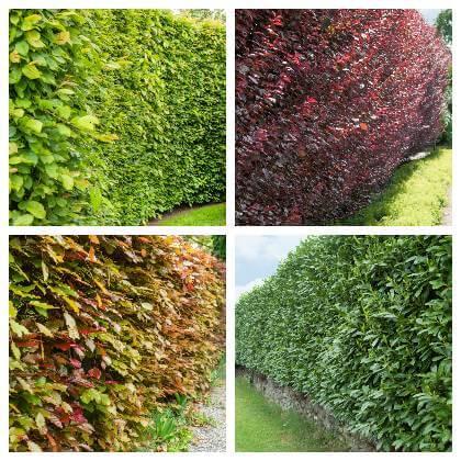 Živý plot z listnáčov
