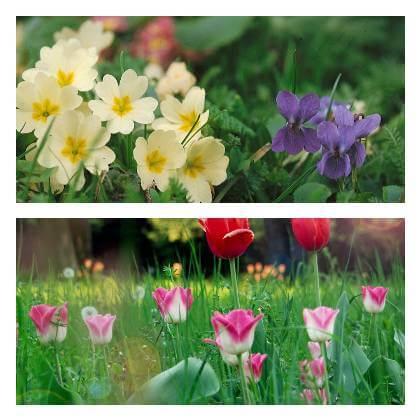 Okrasná záhrada v máji