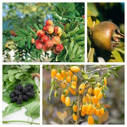 Plody netradičného ovocia