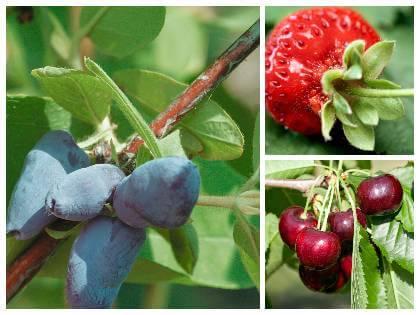 Prvé plody v záhrade