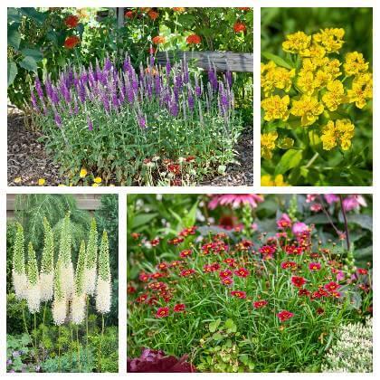 Rastliny na priame slnko