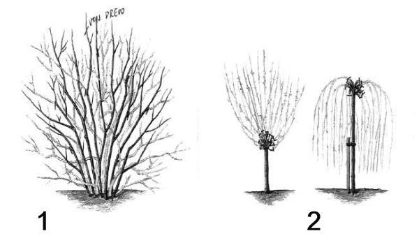 Rez a presvetľovanie drevín
