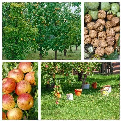 Stromy v ovocnom sade