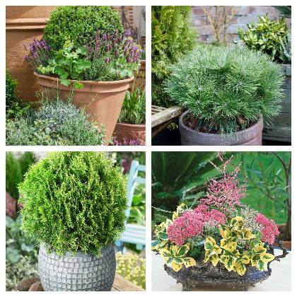 Vhodné rastliny na balkón