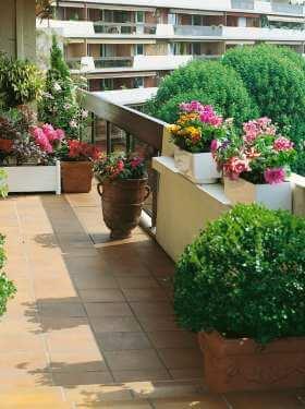 vždyzelené rastliny na balkóne