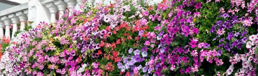 Kombinácie kvetov do truhlíkov