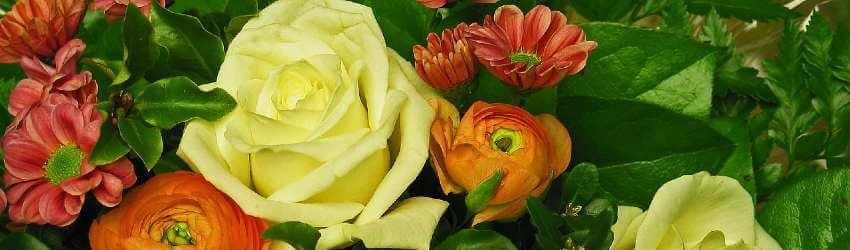 farebné kvety