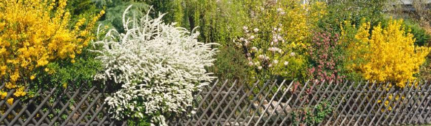 Kombinovaný živý plot