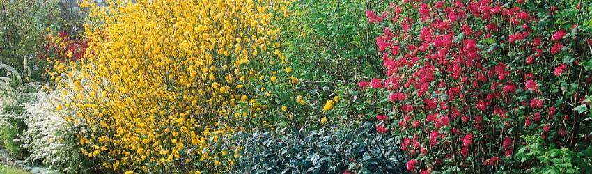 Kvitnúci živý plot