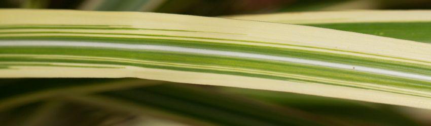 Okrasné trávy na terasu