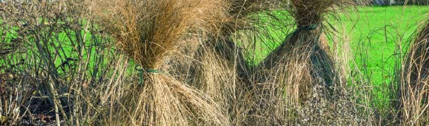 Okrasné trávy zazimovanie