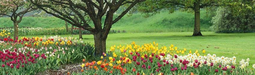 Ovocné stromy v okrasnej záhrade