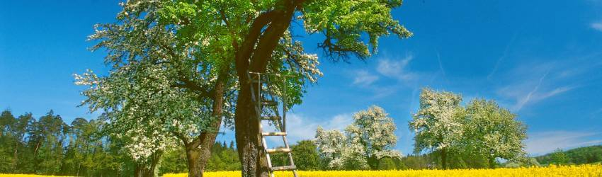 Pestovanie ovocných stromov