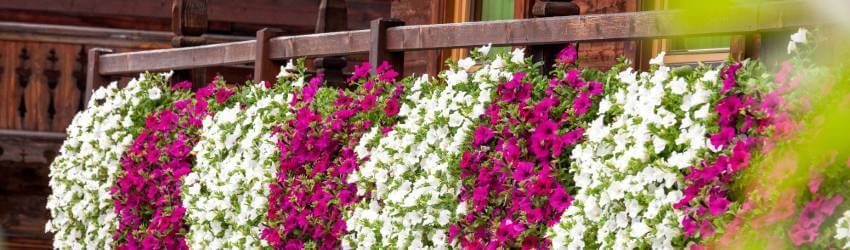 Pestovanie v samozavlažovacích kvetináčoch