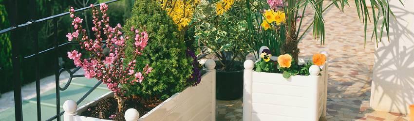 Pestovanie a zimovanie rastlín na balkóne
