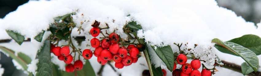 rastliny v zime