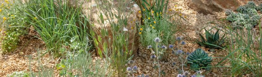 Skalničky pestovanie