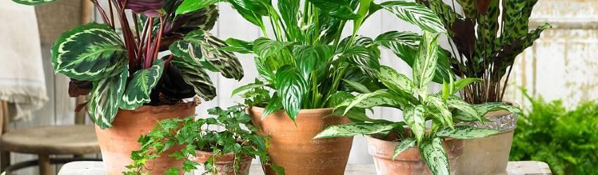 Izbové rastliny na balkóne