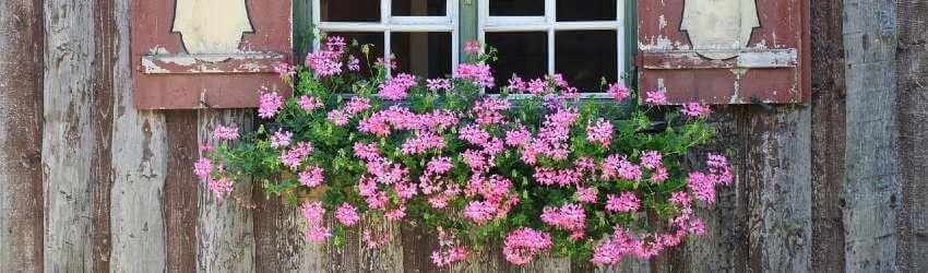 Starostlivosť o rastliny koncom leta