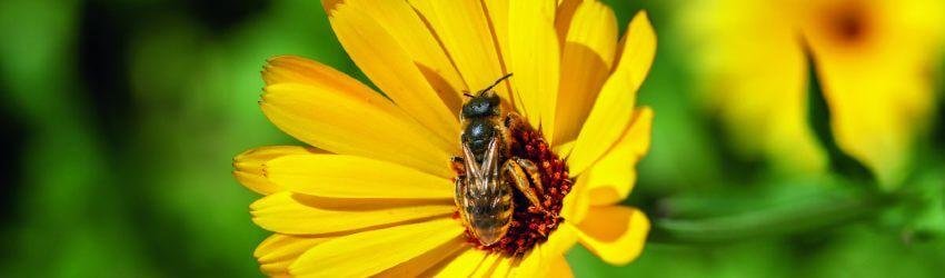 Trvalky pre včely