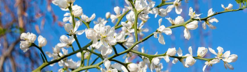 Záhrada v apríli