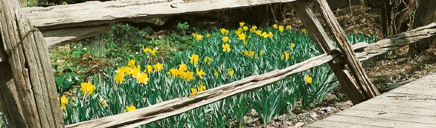 Záhrada v máji