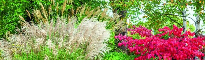 Záhrada v septembri
