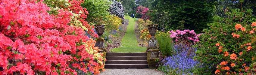 Kríky v záhrade