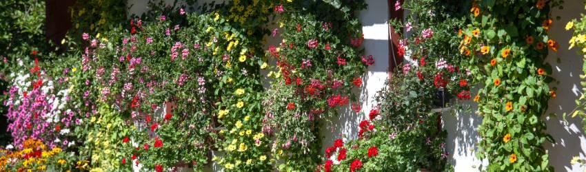 Závesné kvety
