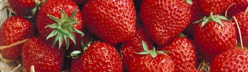 Zber prvých plodov