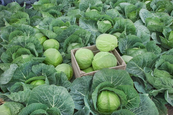 Zelenina v novembri